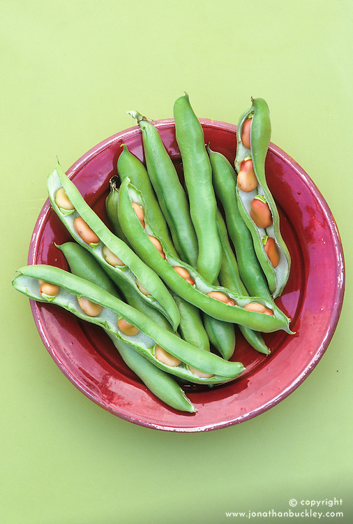Broad bean 'Red Epicure' on a maroon plate