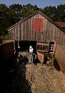 BETHLEHEM, CT- 11 OCTOBER 2005-Mother Jadwiga Makarewicz clears bedding hay from one of the sheep barns at the Abbey of Regina Laudis in Bethlehem. The abbey also raises dairy and beef cattle in addition to the sheep. <br /> (Photo by Robert Falcetti)