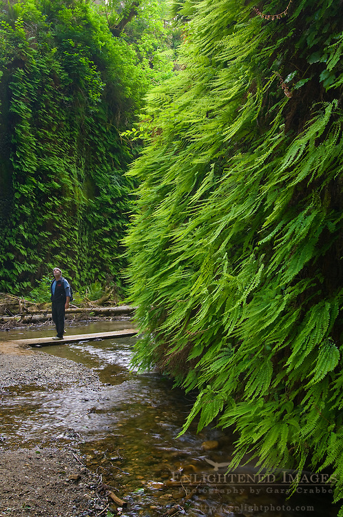Hiker in Fern Canyon, Prairie Creek Redwoods State Park, Californi