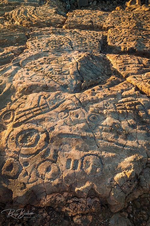Hawaiian petroglyphs on the Kings Trail at Waikoloa, Kohala Coast, The Big Island, Hawaii USA
