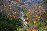 Blackwater river gorge, Blackwater State Park, Davis, West Virginia, USA.