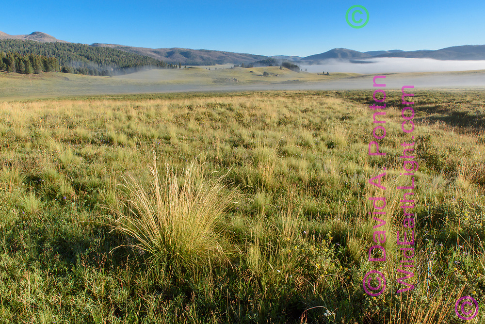 In late summer, evening rain and clear nights result in fog settling into the Valle Grande, a subsidence crater of an ancient volcano that is now grassland, © 2017 David A. Ponton