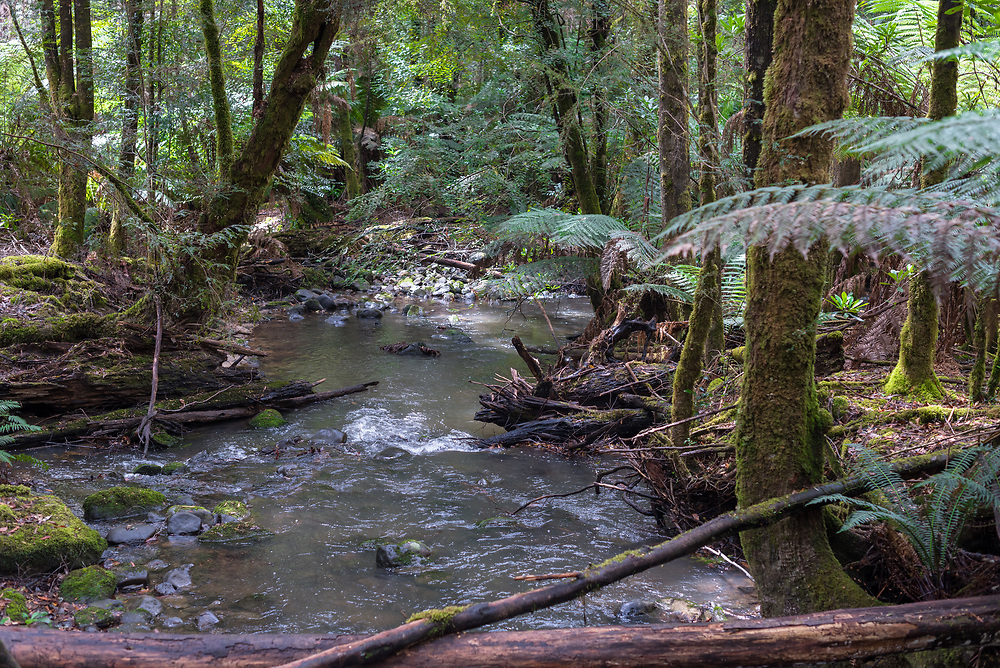 A small creek surrounded by green foliage meanders its way downhill in a rain forest