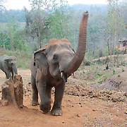 Mida explains how this elephant is using his trunk to yell at us. She likes the motion in the photograph as the elephant dances in the frame.