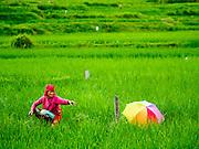 05 AUGUST 2015 - BHAKTAPUR, NEPAL: Rice farmers in a field near Bhaktapur, Nepal.      PHOTO BY JACK KURTZ