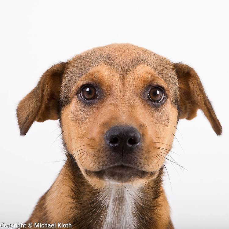 Puppy head portrait photographed against white background