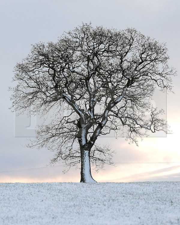 &copy; Licensed to London News Pictures. <br /> 29/01/2015. <br /> <br /> Glaisdale, United Kingdom<br /> <br /> A lone tree stands in a field near Glaisdale in North Yorkshire following overnight snow. A wintery blast causing extremely cold weather is expected to cause some disruption over the next few days.<br /> <br /> Photo credit : Ian Forsyth/LNP