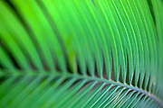 green foliage. Close up of the leaves of a house plant