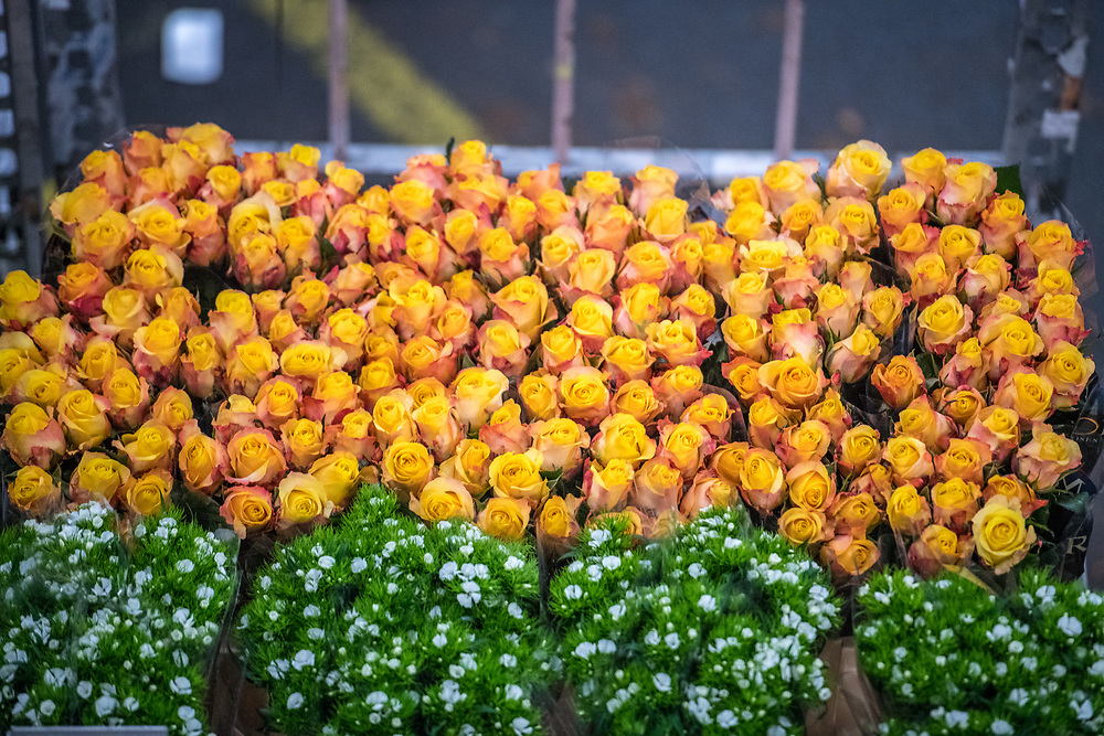 A cart full of yellow roses at the worlds largest flower auction, Royal Flora Holland. Amsterdam, Netherlands