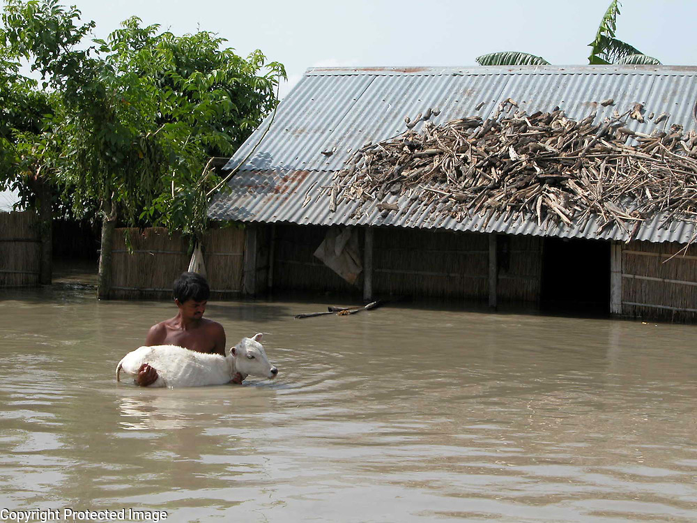 Flood victim Bangladeshi immigrant, Mantaj Ali is shifting his pet-cow, after his house is submerged by floodwaters at Fekamari village, about 317 kilometers southwest of Gauhati, capital of northeastern Indian state of Assam, Wednesday, July 14, 2004. .Floodwaters of the Asia's one of the largest river, Brahmaputra and its 35 tributaries have affected more than one million in all of Indian subcontinent and disrupted communication in many parts of the India and Bangladesh, sources said. (AP Photo/ Shib Shankar Chatterjee)..