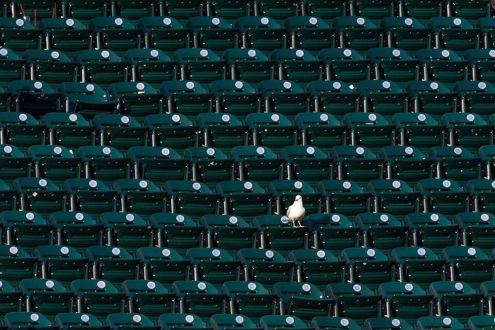 May 24, 2014; Detroit, MI, USA; Lone sea gull sits in the stand during the ninth inning of the game between the Detroit Tigers and the Texas Rangers at Comerica Park. Mandatory Credit: Rick Osentoski-USA TODAY Sports