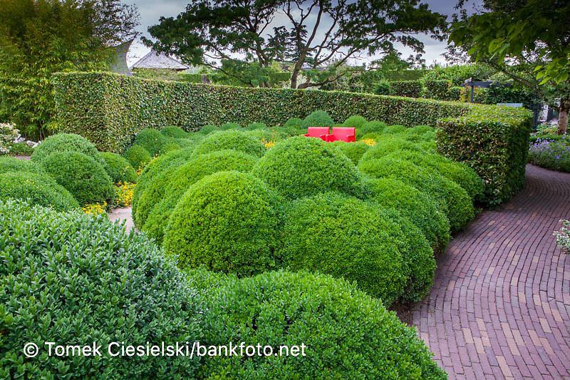 Contemporary modern garden in minimalistic, style.