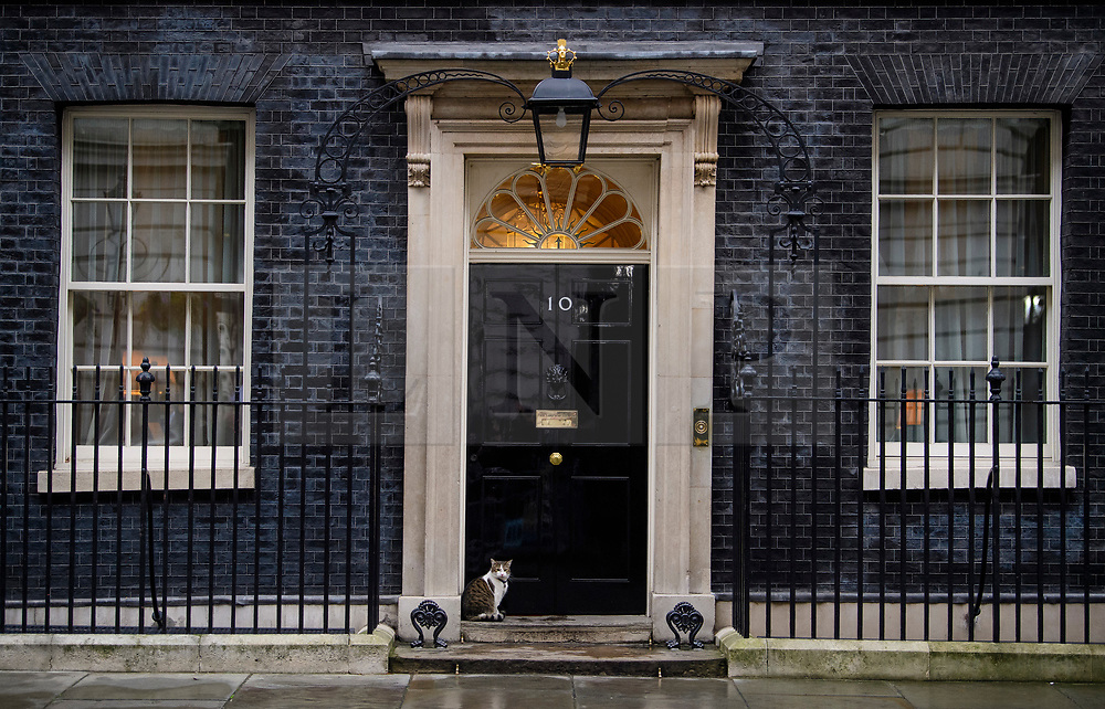 © Licensed to London News Pictures. 08/03/2017. London, UK. LARRY the Downing Street cat , sits on the front step to 10 Downing Street, before British chancellor Philip Hammond delivers his 2017 Budget to Parliament. Photo credit: Ben Cawthra/LNP
