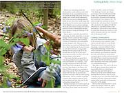 Child studying Virginia bluebells at Mundy Wildflower Garden, Cornell Botanic Gardens