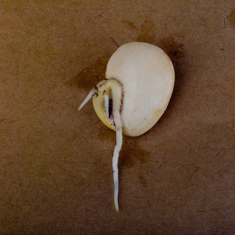Vegetative reproduction, healthy seed growth