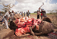 The butchering of an elephant by community members after an incident of human elephant conflict in Laikipia, Kenya
