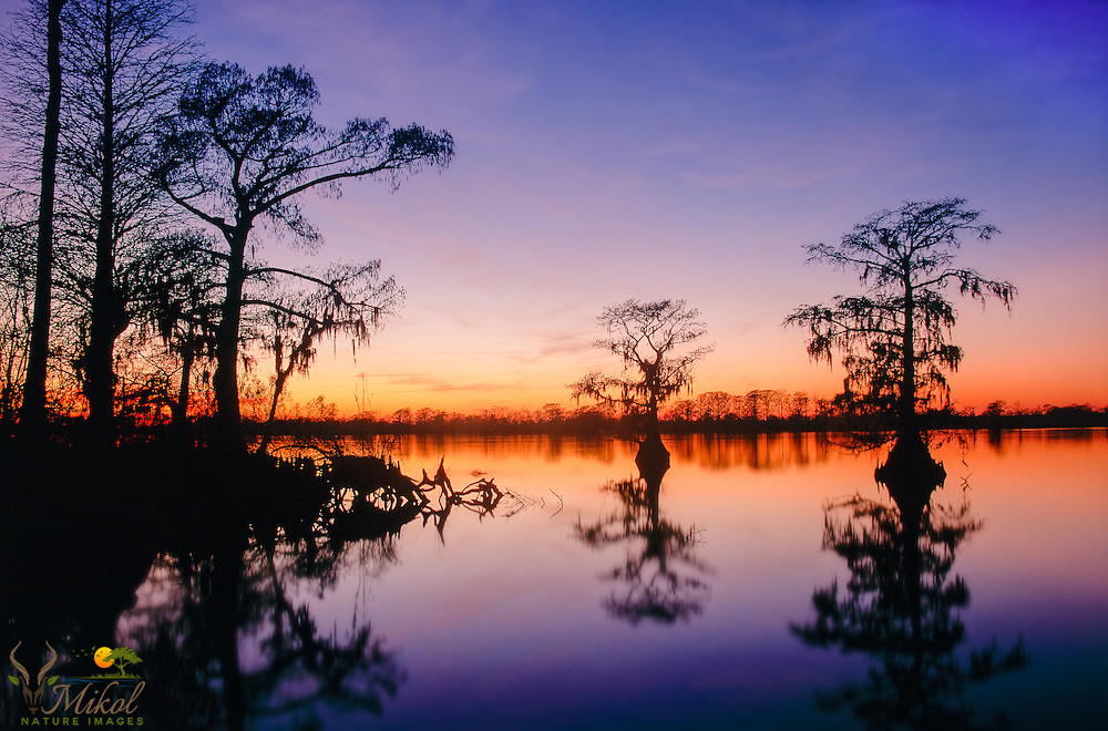 Sunset over Waccamaw River with Cypress Tree Silhouettes