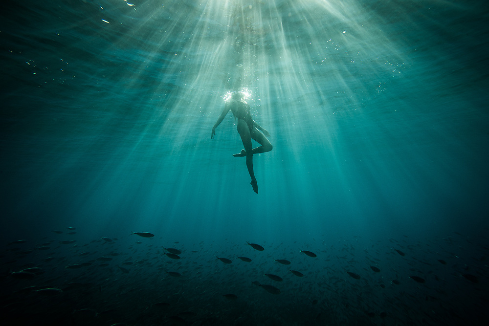 A female freediver swimming in rays of light and schools of fish of of Oahu, Hawaii. water, Trevor Clark Photography, Clarkbourne Creative, Laurel Winterbourne, www.clarkbourne.com