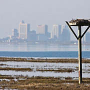 Man made Osprey nesting platform with Altantic City NJ in background