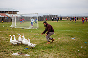 Saturday afternoon football game in Marginenii de Jos in between a local team with players mostly having Roma ethnicity and a team from another village. A man is chasing geese away after they entered the football field.