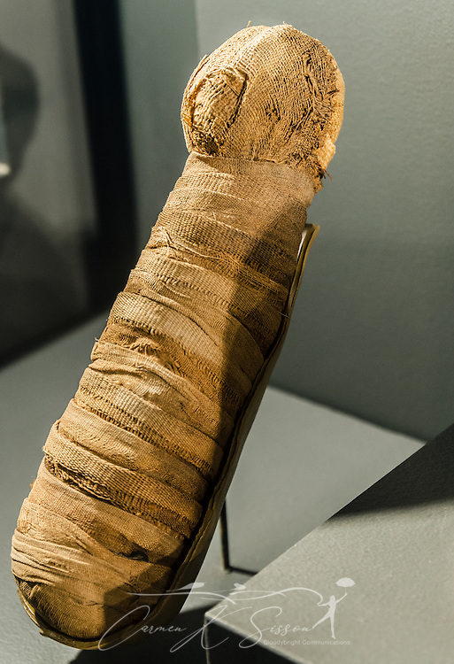 An Egyptian kitten mummy, circa 664-332 B.C., is displayed at the Michael C. Carlos Museum at Emory University, July 8, 2014, in Atlanta, Georgia. The museum was founded in 1876 and contains more than 17,000 artifacts in its permanent collections. (Photo by Carmen K. Sisson/Cloudybright)