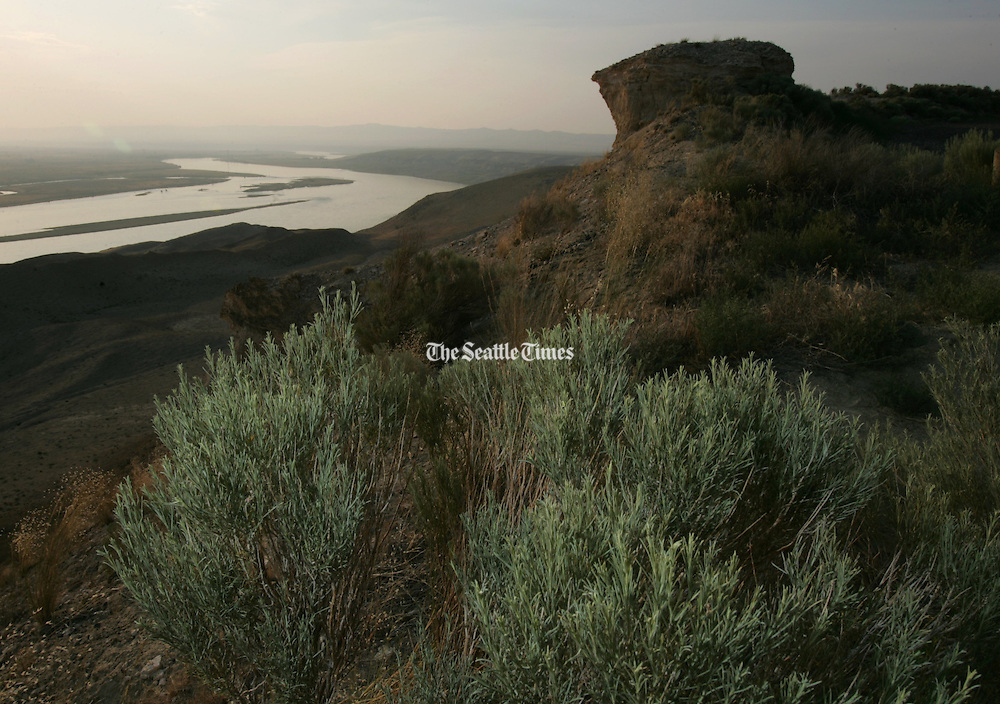 A photographic flash exposes plant-life along the Hanford Reach's shrub-steppe along the Columbia River. (Ken Lambert / The Seattle Times)