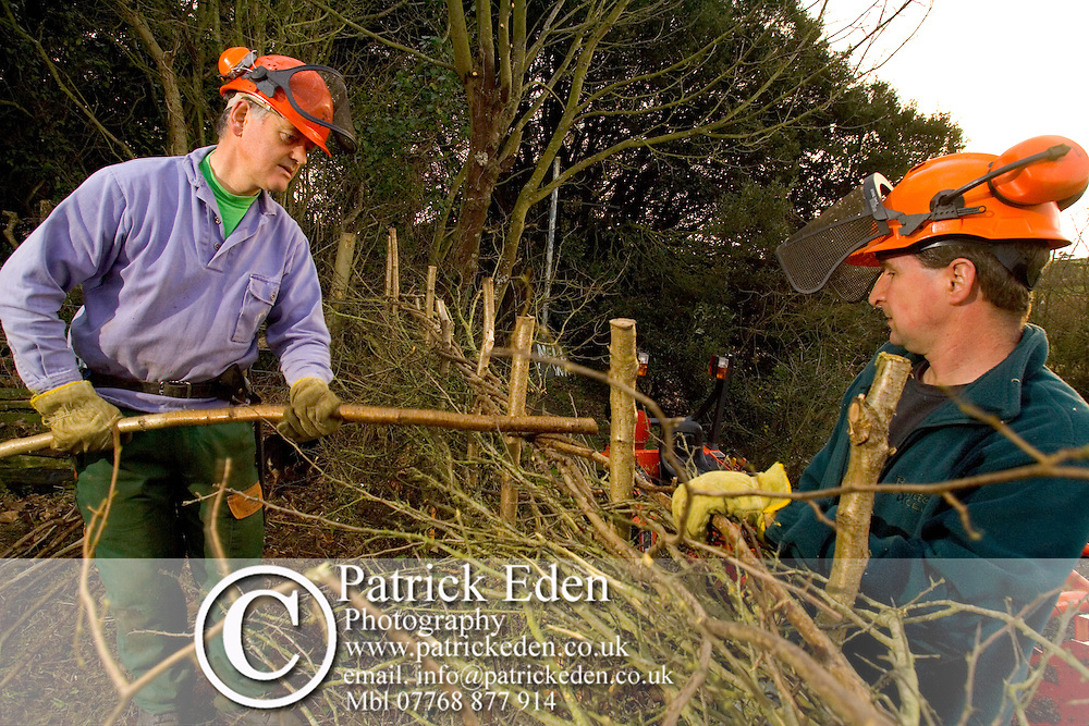Traditional Hedge Laying, Hobbit House, Whitwell. Isle of Wight, England , UK, Photographs of the Isle of Wight by photographer Patrick Eden photography photograph canvas canvases