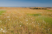 Zumwalt Prairie in northeastern Oregon, owned and managed by The Nature Conservancy