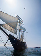 Square-rigger tall sailing ship with Frigatebird overhead, Galapagos