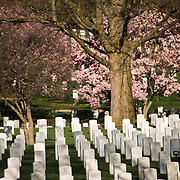 A view of Arlington Cemetery in the spring.