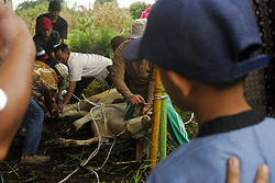 September 1, 2017 - north sumatera, Indonesia - indonesia, 01 september 2017. North sumatera, karo district. has become a tradition in Indonesia, the community held a sacrificial animal slaughter on the feast of Eid al-Adha, as seen in karo district, the unity of the surrounding samura roadside (BPJS) and the prosperity of the mosque taufik  samura street, carrying the slaughtering of 6 cows and 3 goats and will be distributed equally to all Muslim community in this area,  said nasrun tarigan and baharudin sikedang, as committee of the implementation of slaughter of sacrificial animals this year. (Credit Image: © Sabirin Manurung/Pacific Press via ZUMA Wire)