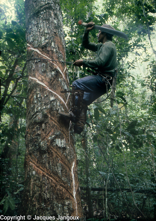 Man collecting balata latex in Amazon rainforest (balata: Manilkara bidentata, family Sapotaceae).<br />