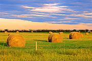 Bales<br /> Parkbeg<br /> Saskatchewan<br /> Canada