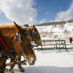 A horse drawn sleigh carries skiers in Quechee, Vermont.