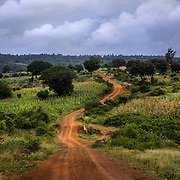 Rural Kenya landscape, near the coastal town of Kilifi. Many Kenyan children do not live in towns close to clinics or health centers, meaning nurses must travel long distances to rural areas for vaccine campaigns. <br /> <br /> More than 16,000 Kenyans died after pneumococcus infections in 2000, the WHO has estimated, and the bacteria caused 235,000 episodes of pneumonia in the country the same year. But since its introduction in January 2011, the PCV-10 vaccine has reduced the incidence of Invasive Pneumococcal Disease in children under five in Kilifi by approximately two-thirds.