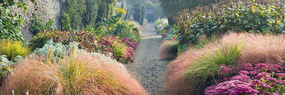 Double borders including Sedum 'Autumn Joy' and ornamental grasses in the walled garden at Glin Castle, Ireland