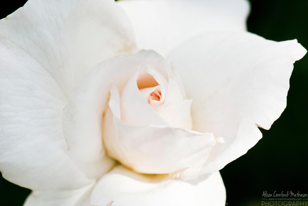 Rose Maria Mathilda