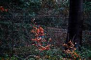 DEN HAAG - Koning Willem-Alexander staat op het punt te verhuizen van de Eikenhorst in Wassenaar, dat hij sinds 2003 bewoont, naar Paleis Huis ten Bosch in Den Haag eind van december staat de verhuizing op de planning . Paleis Huis ten Bosch staat in de steigers wegens een verbouwing. Het paleis wordt in een keer verbouwd voor een bedrag van 59 miljoen euro. huis van koning willem alexander en koningin maxima woning nieuw verhuizen  begroting   budget   huis ten bosch   Nederland   news   nieuws   overheidsuitgaven   Rijksgebouwendienst   verbouwing ROBIN UTRECHT