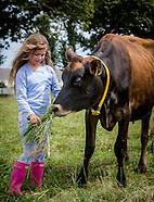 Junior cattle