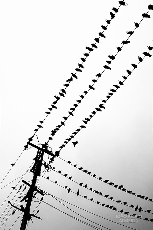Birds on a powerline at a street of Yangon