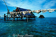 fishermen drying catch at seasonal <br /> fishing camp on Belize barrier reef during <br /> grouper spawning aggregation, Caye Glory ( Emily ), 1988<br /> Belize, Central America ( Caribbean Sea )