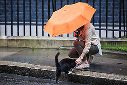© Licensed to London News Pictures. 02/08/2016. London, UK. Palmerston, the cat belonging to the Foreign and Commonwealth Office, is fussed by a woman leaving No. 10 Downing Street, home to the Prime Minister's cat Larry. The cats have been seen fighting in recent weeks, and an animal charity has reportedly been called in to arbitrate the dispute. Photo credit: Rob Pinney/LNP