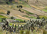 A checkerboard of farm, crop, ranch, and cactus land climbs a hill near Lago Quilotoa, in Ecuador, South America.