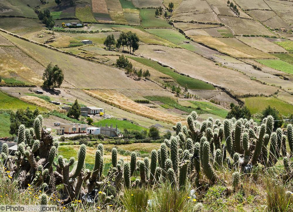A checkerboard of farm, crop, ranch, and cactus land climbs a hill near Lago Quilotoa, in Ecuador, South America.
