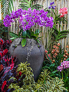 From the orchid show at the New York Botanical Garden