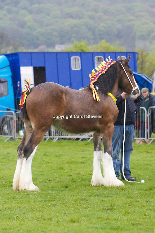 Mr &amp; Mrs G Clough's Lauren Bank Queen Victoria   S Boothay Richard<br /> Yearling Colt, Gelding or Filly Class