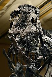 15.03.2016, Museum fuer Naturkunde, Berlin, GER, Naturkundemuseum Berlin, im Bild Das weltweit einmalige Skelett des (Tyrannosaurus rex, T. rex)Tristan - Otto, Schaedel // Exhibits in the Natural History Museum Museum fuer Naturkunde in Berlin, Germany on 2016/03/15. EXPA Pictures © 2016, PhotoCredit: EXPA/ Eibner-Pressefoto/ Schulz<br /> <br /> *****ATTENTION - OUT of GER*****