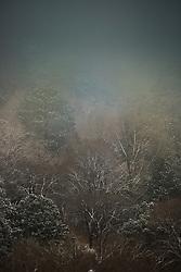 moody Winter landscape in Santa Fe, NM