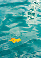 The Journey. An autumn leaf travels down the Bosphorus Strait, Anadolu Kavagi, Turkey.