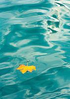 The Journey. An autumn leaf travels down the Bosphorus Strait, Anadolu Kavagi, Turkey.